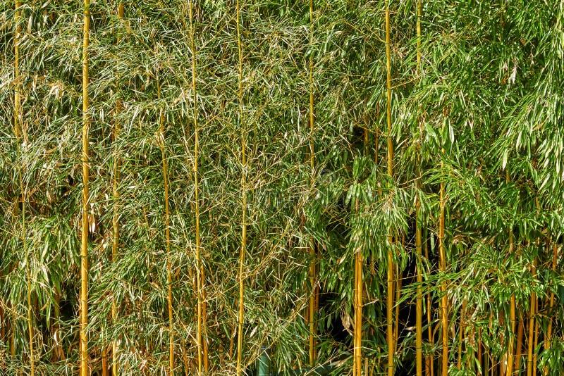 Hojas verdes con textura amarilla de los troncos imágenes de archivo libres de regalías