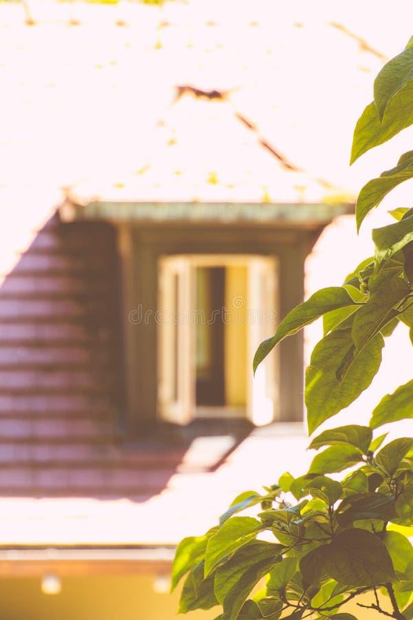 Hojas verdes con una casa de madera borrosa en la parte posterior fotos de archivo libres de regalías
