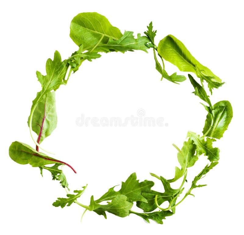 Hojas verdes de la ensalada de la lechuga aisladas en el fondo blanco imagen de archivo