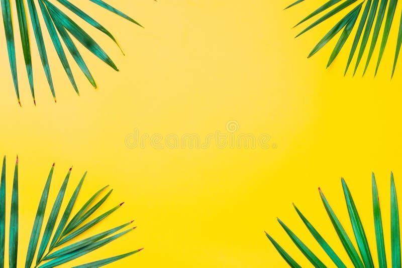 Hojas verdes de la palmera en fondo amarillo Estilo m?nimo puesto plano de la naturaleza de hojas de palma tropicales en fondo am fotos de archivo