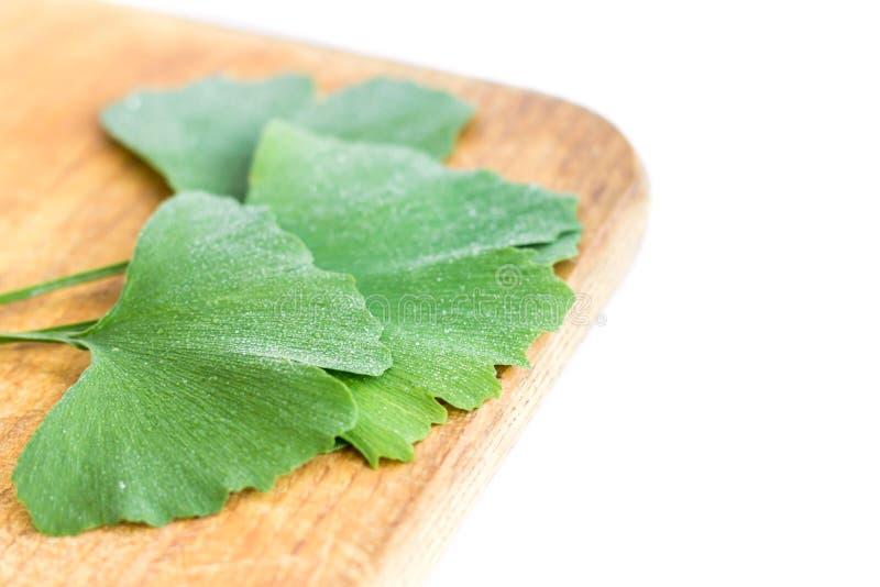 Hojas verdes de la planta del biloba del Ginkgo aislada en el fondo blanco Hojas medicinales del Gingko del árbol de la reliquia  foto de archivo