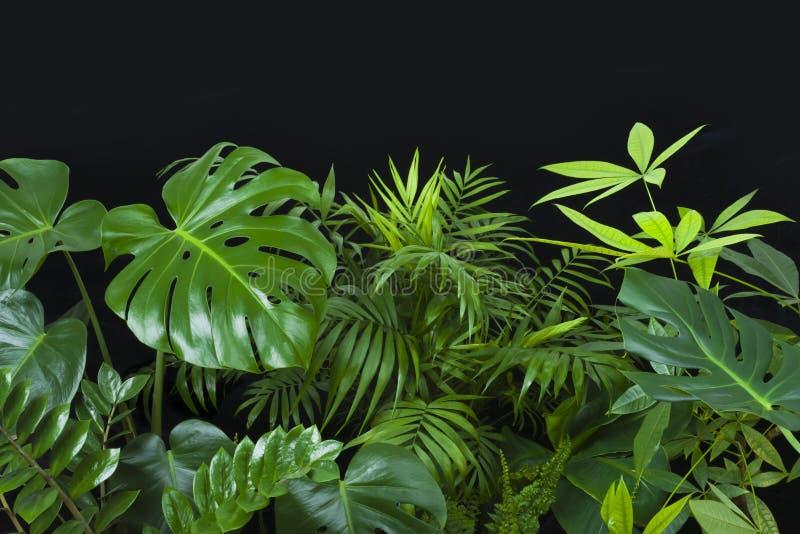 Hojas verdes de plantas forestales tropicales sobre fondo negro imagen de archivo