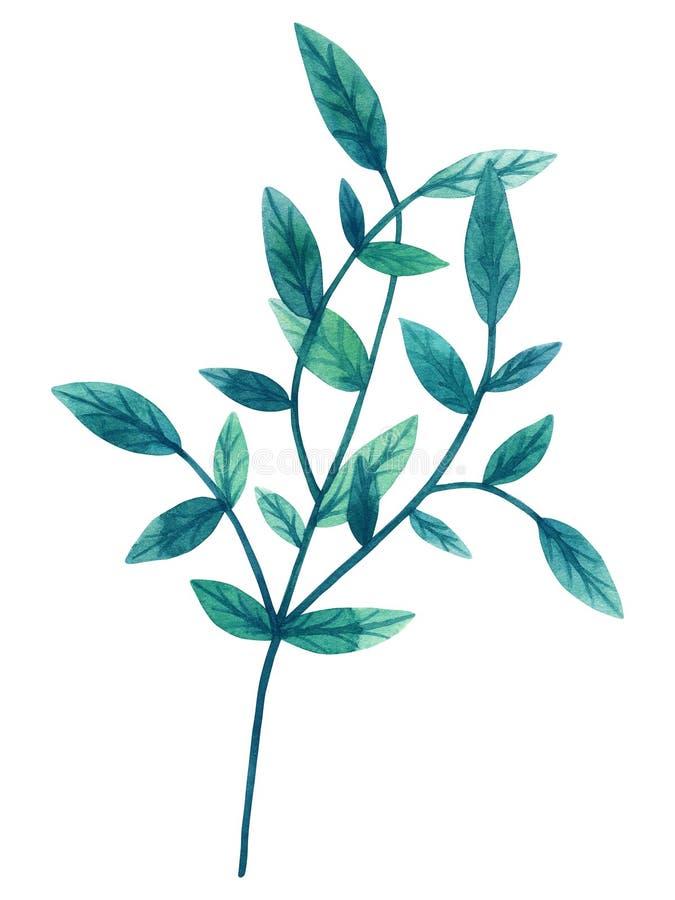 Hojas verdes decorativas en rama Ejemplo dibujado mano de la acuarela Aislado en el fondo blanco stock de ilustración