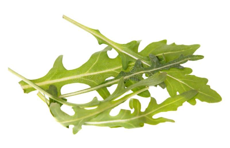 Hojas verdes del arugula Rucola o de la ensalada de Rocket aislada en el fondo blanco fotografía de archivo libre de regalías