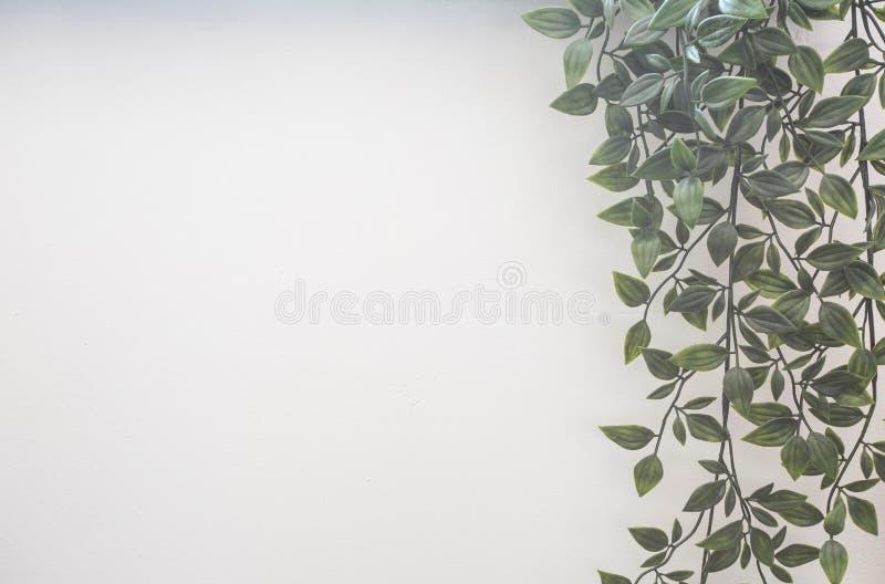 Hojas verdes en la pared blanca, plantas colgantes foto de archivo