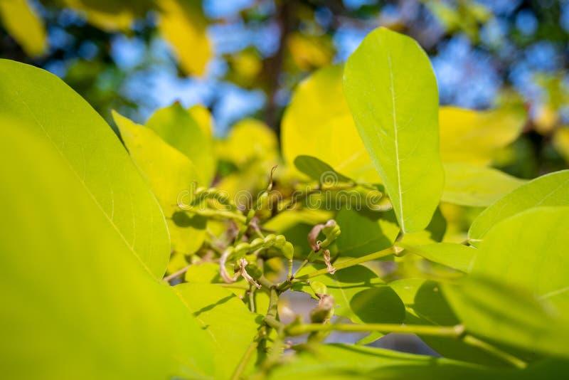 Hojas verdes en las ramas de árboles con el fondo borroso de la hoja fotografía de archivo