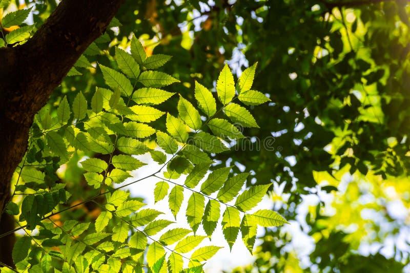 Hojas verdes en parque de la ciudad en la primavera fotografía de archivo