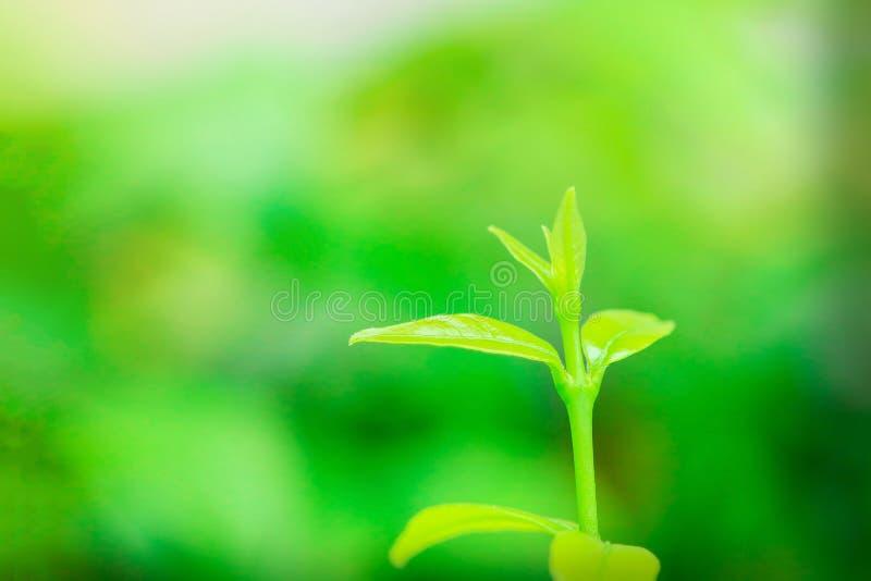 Hojas verdes en verde de la naturaleza foto de archivo