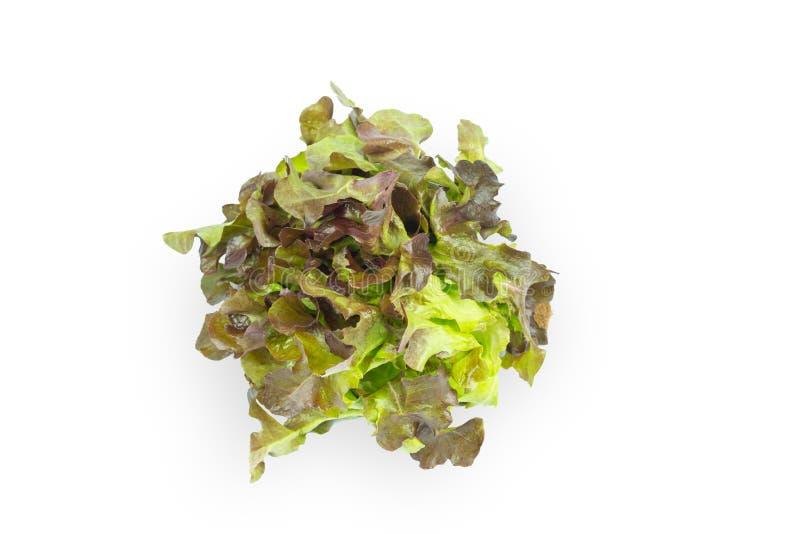 Hojas verdes frescas de la ensalada de la lechuga aisladas en el fondo blanco fotografía de archivo