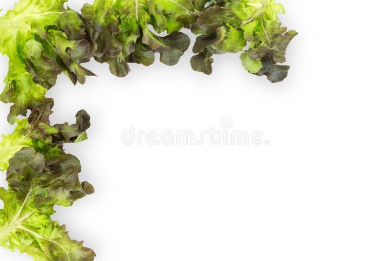 Hojas verdes frescas de la ensalada de la lechuga aisladas en el fondo blanco imágenes de archivo libres de regalías