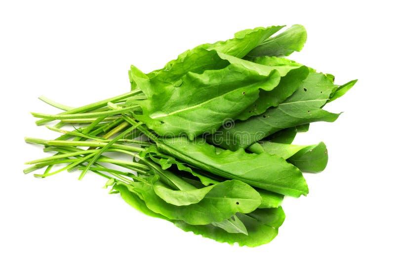 Hojas verdes frescas de la lechuga aisladas en un fondo blanco fotografía de archivo