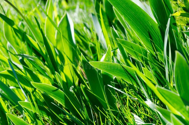 Hojas verdes hermosas de flores Un modelo de hojas fotografía de archivo libre de regalías