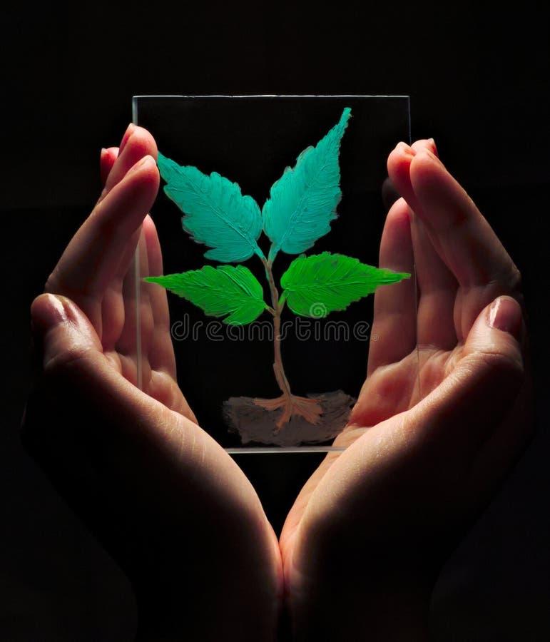 Hojas verdes pintadas vidrio foto de archivo libre de regalías