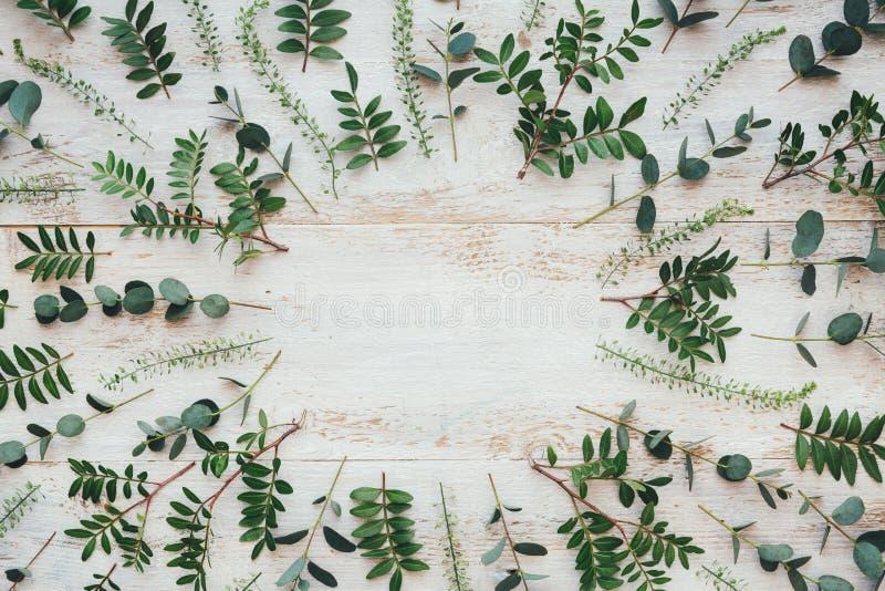 Hojas verdes sobre tablas de madera blanca imagen de archivo