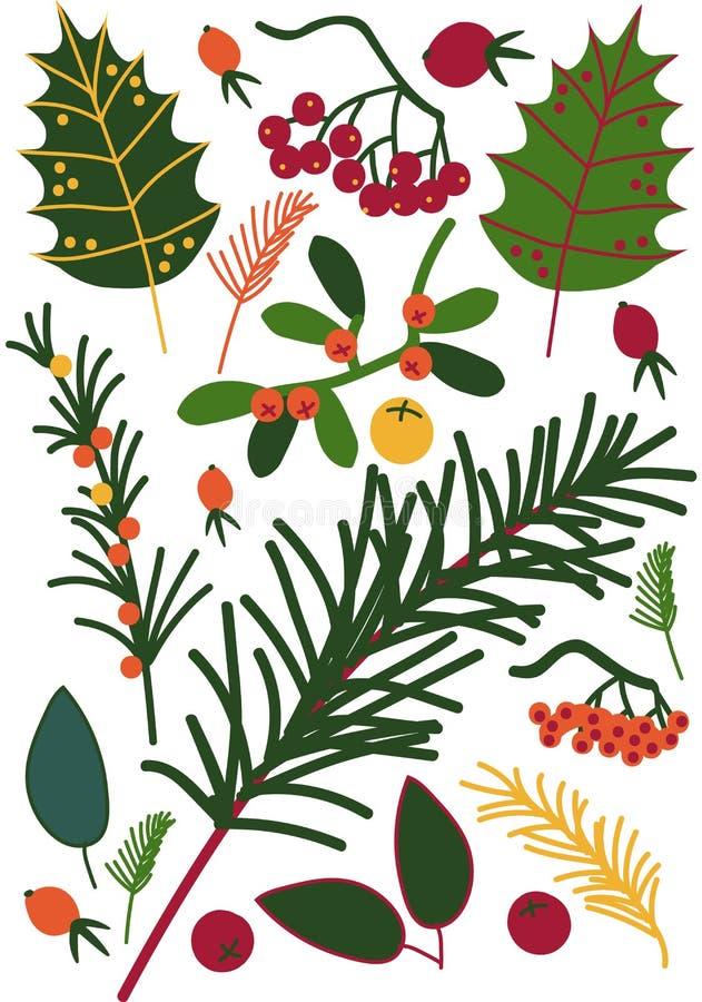 Hojas y Beriies, puntillas del espino cerval de mar, serbal, Viburnum, pino, modelo inconsútil floral, vector estacional de la de libre illustration