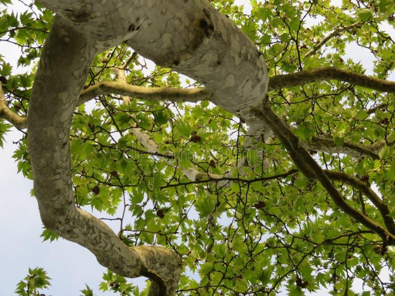 hojas y cielo del árbol plano foto de archivo libre de regalías