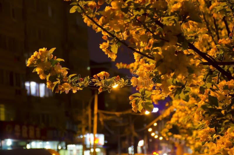 Hojas y edificios en la noche foto de archivo