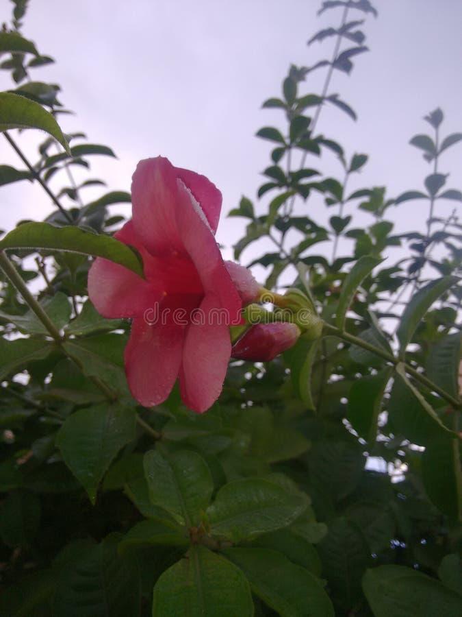 Hojas y flores imagen de archivo libre de regalías