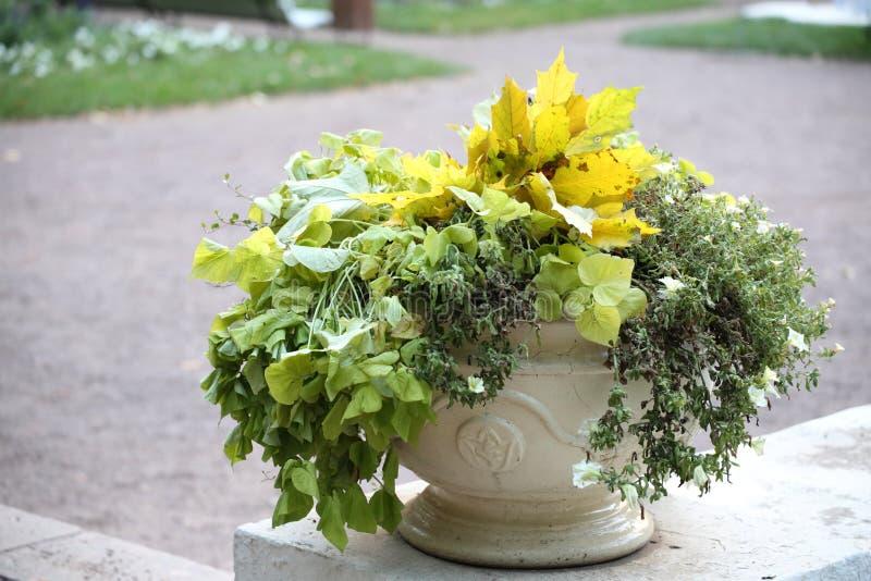 Hojas y flores en la maceta fotografía de archivo libre de regalías