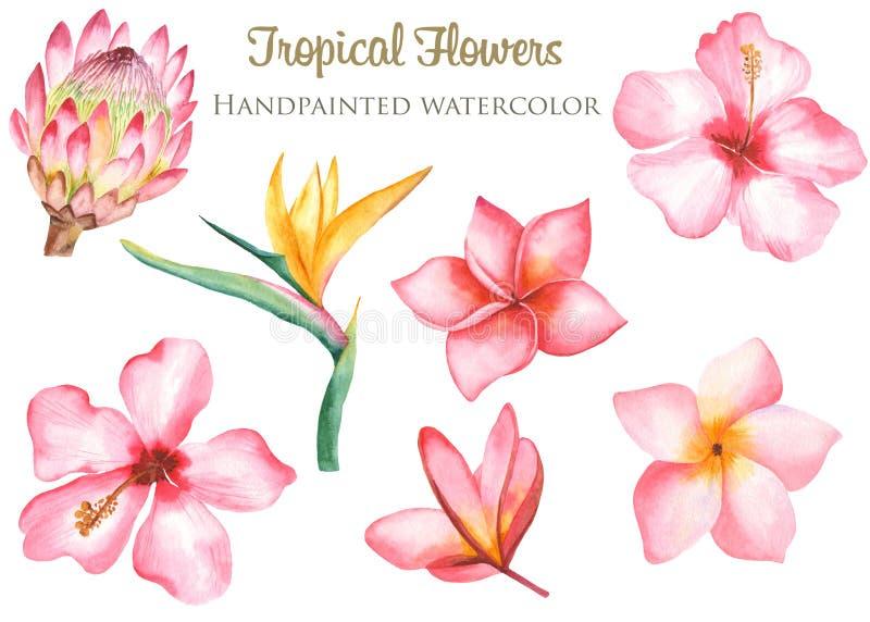 Hojas y flores tropicales de la acuarela libre illustration