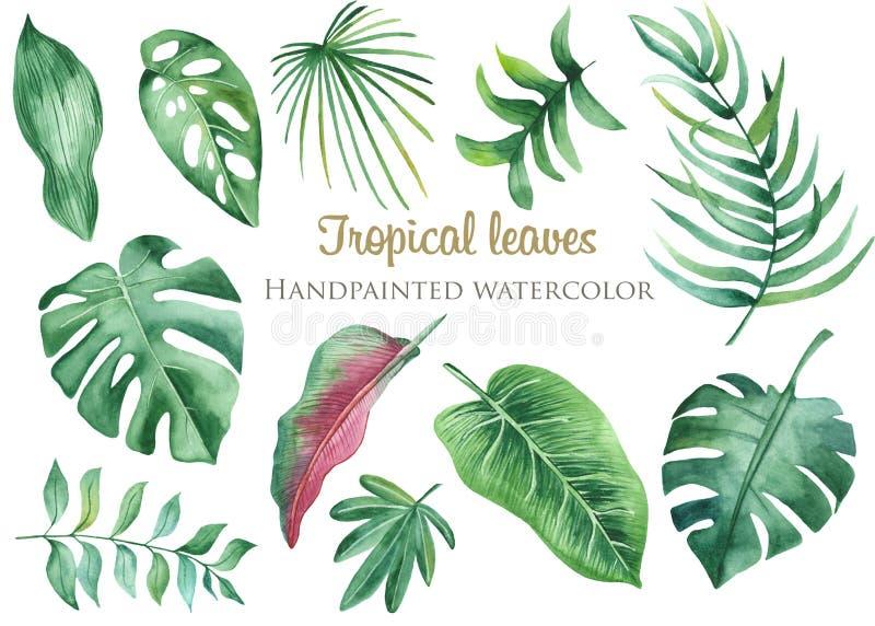 Hojas y flores tropicales de la acuarela stock de ilustración