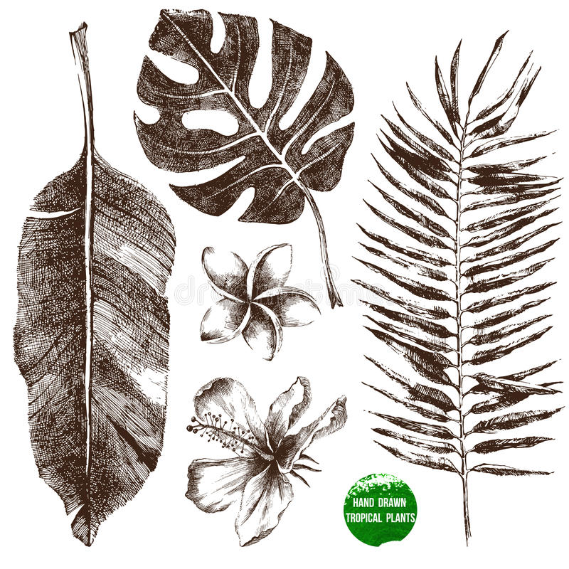 Hojas y flores tropicales dibujadas mano stock de ilustración