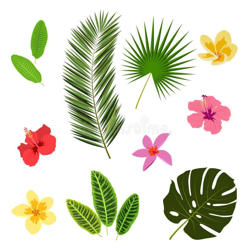 Hojas y flores tropicales, elementos del verano para su diseño, bandera, aviador, cartel, etc ilustración del vector