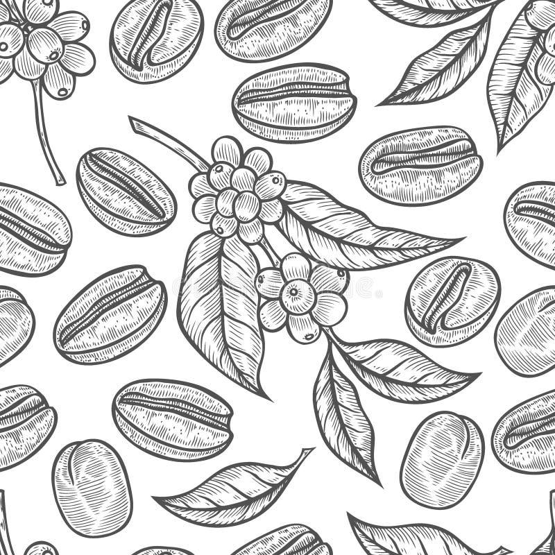 Hojas y frutas del café ilustración del vector