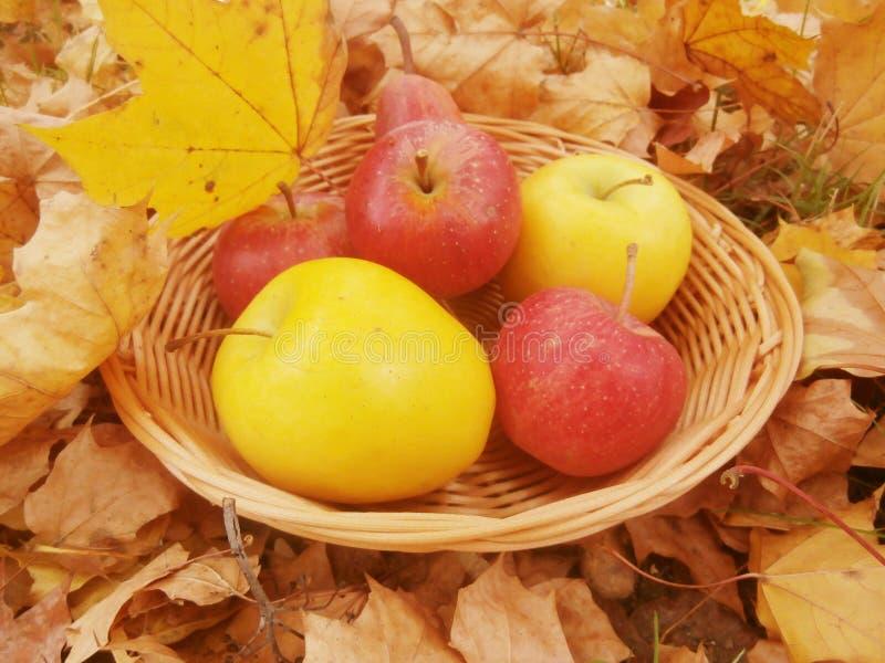 Download Hojas y manzanas de otoño foto de archivo. Imagen de otoño - 44854496