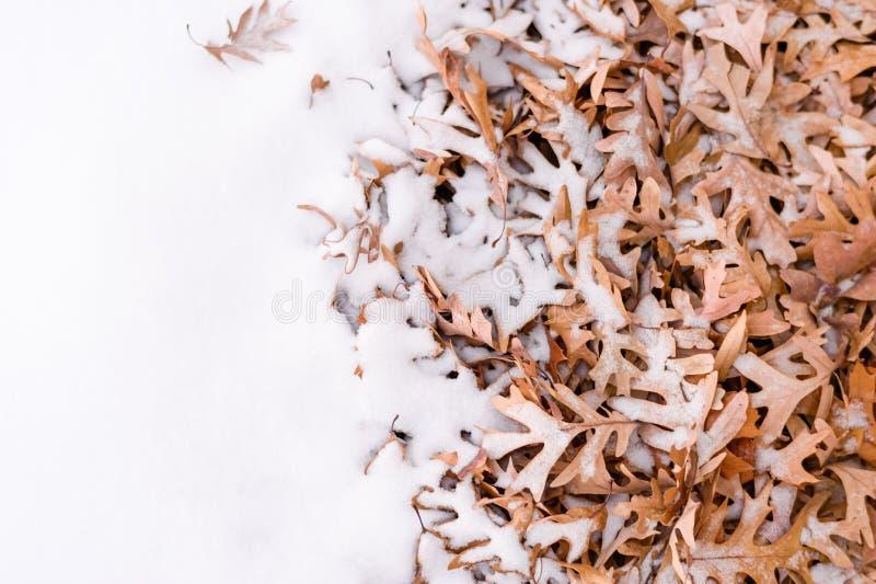Hojas Y Nieve Caidas Durante Invierno Imagen de archivo - Imagen de ...