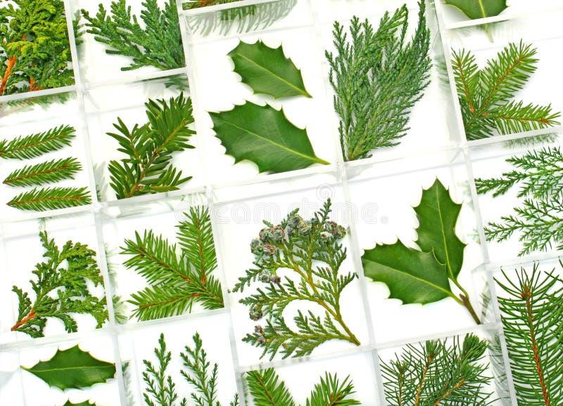 Hojas y plantas del verde fotografía de archivo libre de regalías