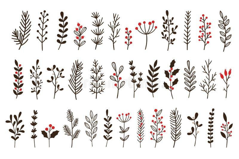 Hojas y ramas de invierno dibujadas a mano Ropa floral, rama botánica con conjunto vectorial de doodle de baya y hoja ilustración del vector