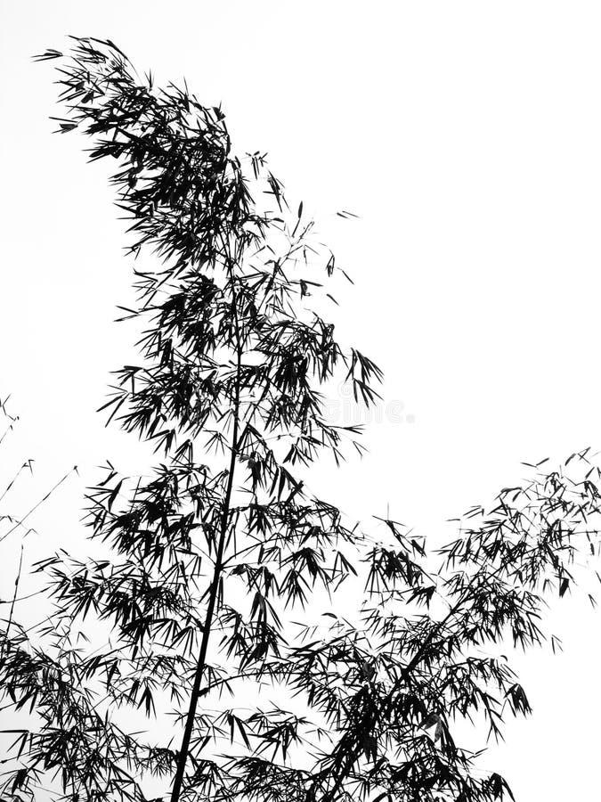 Hojas y ramificaciones del bambú en silueta stock de ilustración