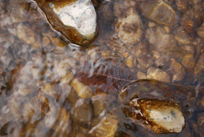 Hojas y rocas en agua poco profunda foto de archivo libre de regalías