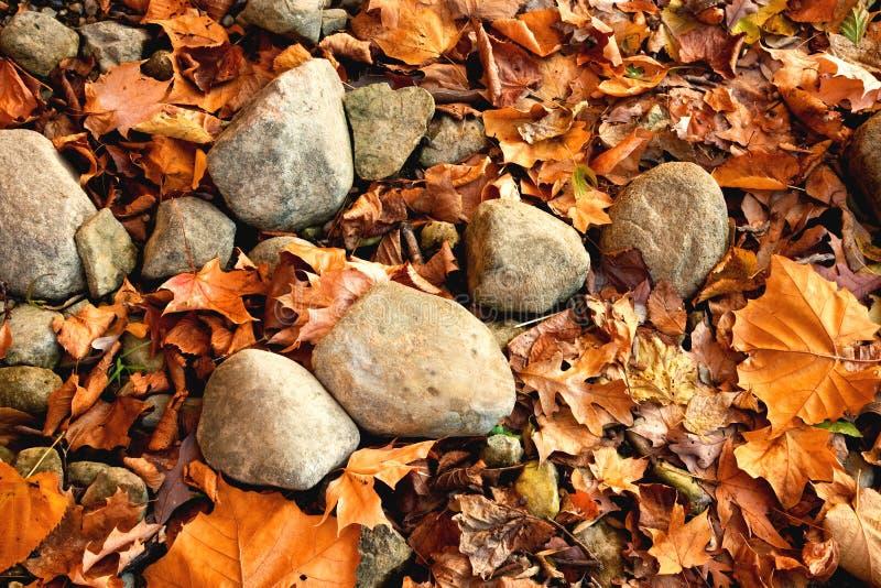 Hojas y rocas otoñales foto de archivo libre de regalías