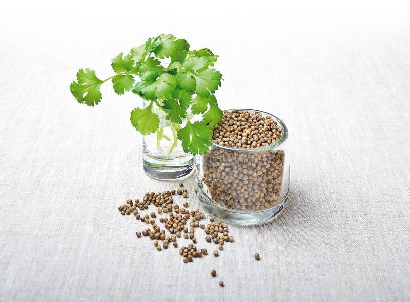 Hojas y semillas - cilantro del coriandro fotos de archivo
