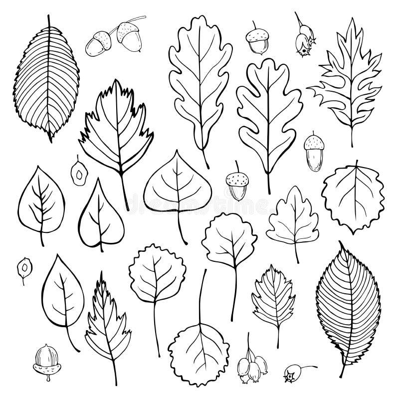Hojas y semillas de árboles Ejemplo del bosquejo del vector stock de ilustración