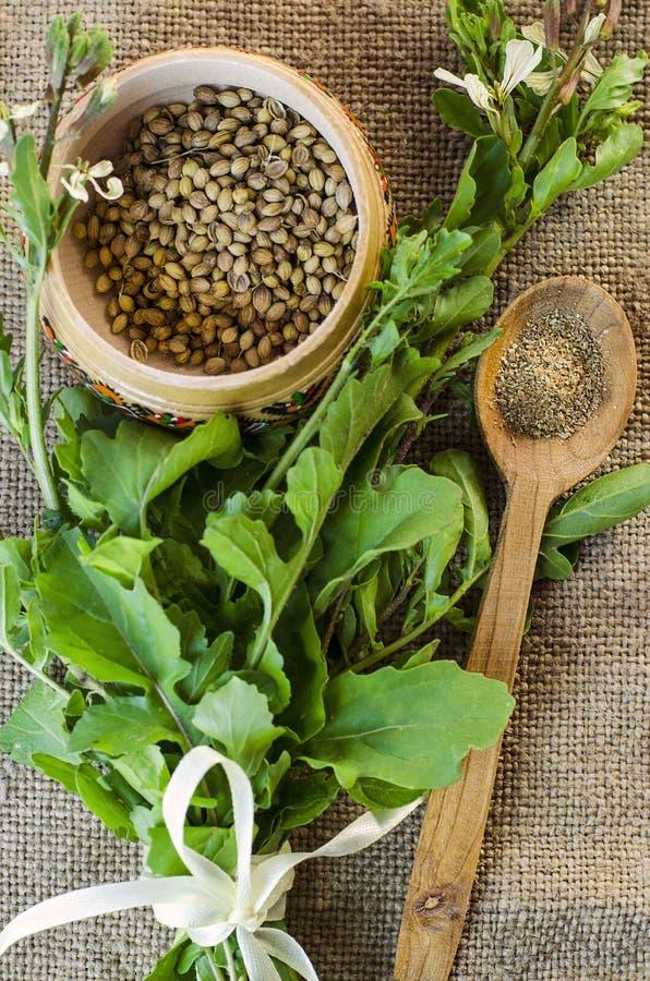 Hojas y semillas de coriandro fotografía de archivo libre de regalías