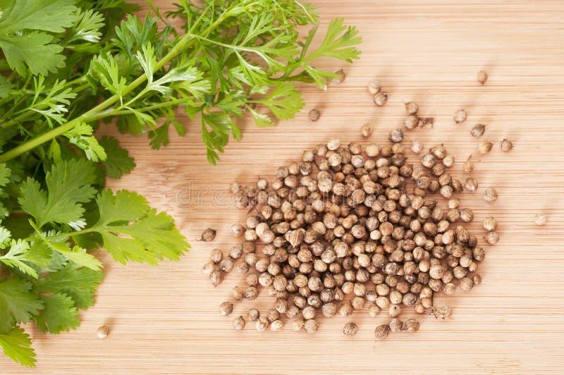 Hojas y semillas del coriandro imagen de archivo