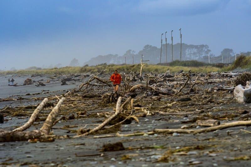 Hokitika nowy Zealand - november2,2015: wykorzeniający i suszy drzewa st obrazy stock