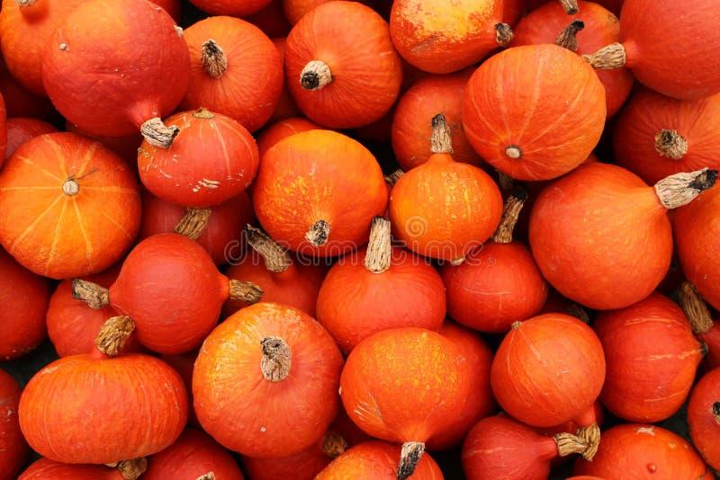Download Hokkaido Pumpkins stock photo. Image of farmer, crop - 13215522