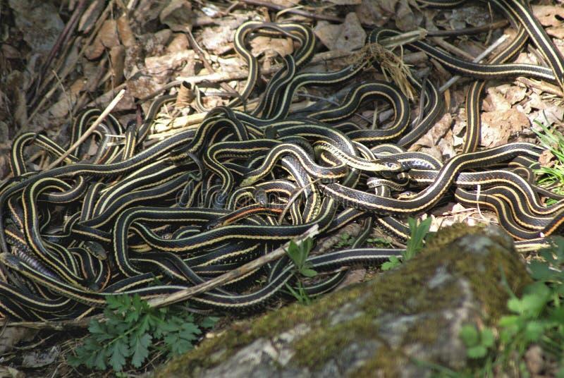 Hol 1 van de slang stock fotografie