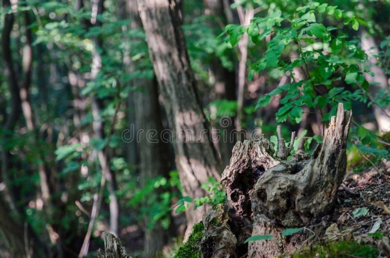 Hol van een boom royalty-vrije stock afbeelding