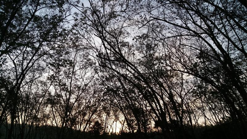 Hola granja de goma de la mañana foto de archivo
