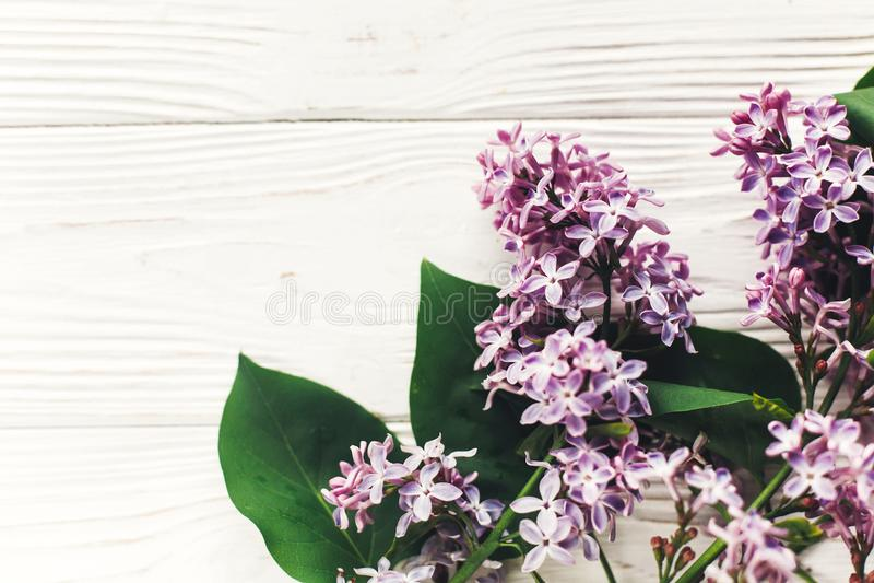 Hola imagen de la endecha del plano de la primavera flores hermosas de la lila en w rústico imagen de archivo libre de regalías