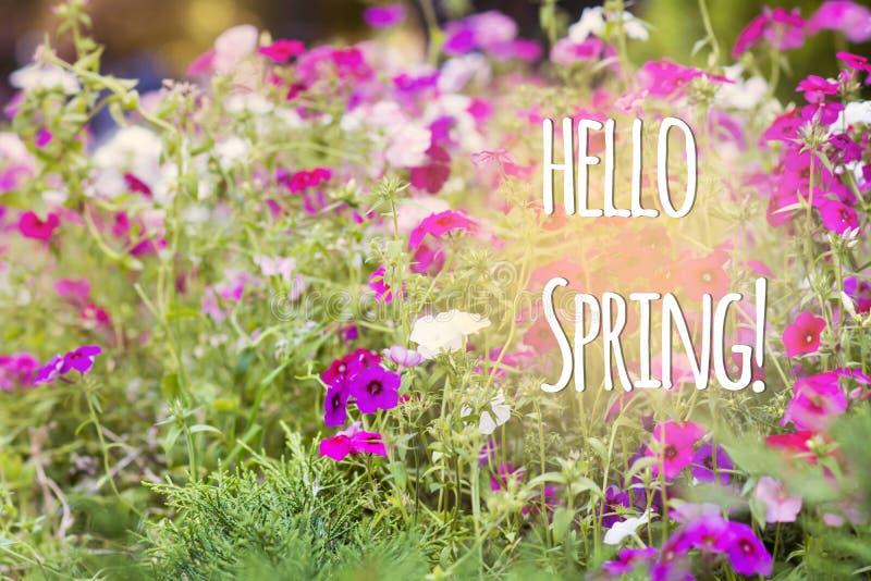 Hola mensaje de la primavera con flores hermosas foto de archivo libre de regalías