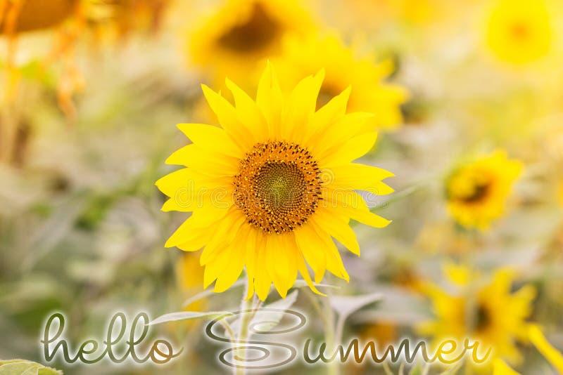 Hola tarjeta de letras del verano Campo de Sunflowers fotos de archivo libres de regalías