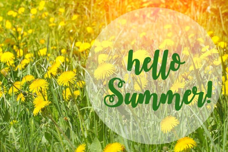 Hola tarjeta de letras del verano Concepto del verano Diente de le?n entre las flores foto de archivo libre de regalías