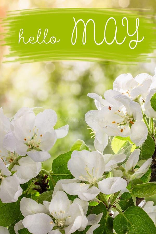 Hola tarjeta de letras de mayo Fondo del resorte con las flores fotografía de archivo libre de regalías