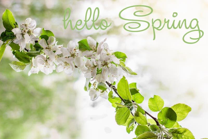 Hola texto de la primavera Manzano en primavera temprana imagenes de archivo